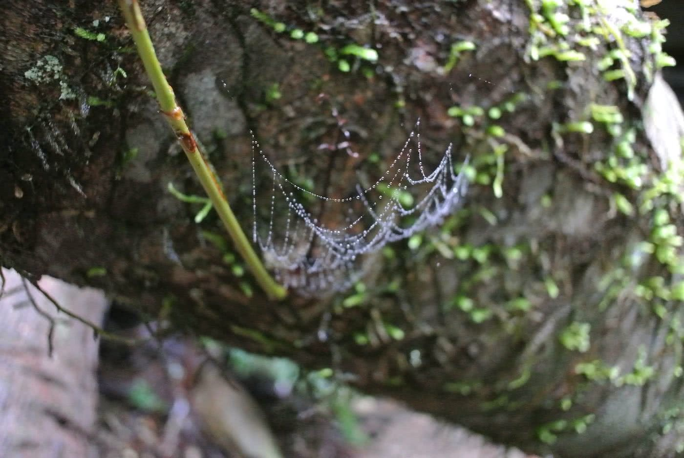 Quiet Weekend Escape In Bottle-Free Bundanoon (NSW), Cara Van Wyk, spider web, log, moss