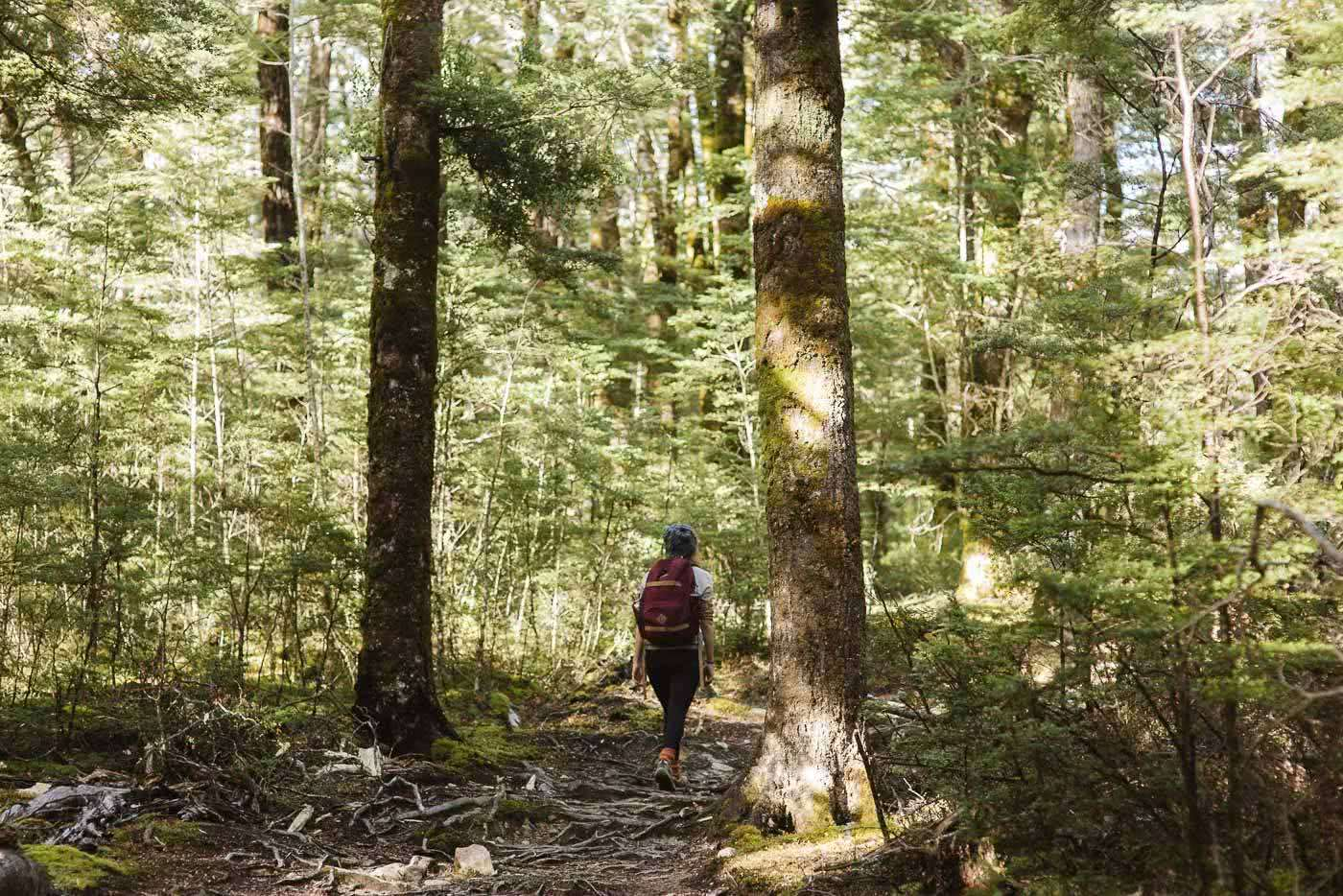 Bealey Spur // Day Hike in Arthurs Pass (NZ), forest, woman