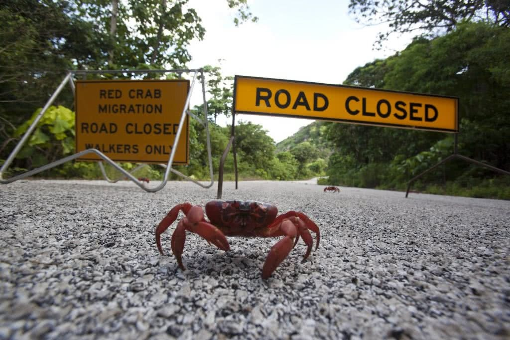 Exploring Australia From The Land, Sea And Sky – Wildlife Photographer Scott Portelli, Scott Portelli, red crab, road, road signs