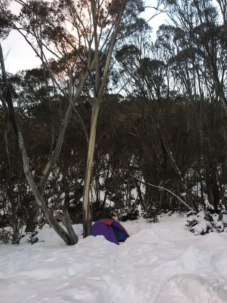 Snowshoeing Across The Aussie Alps, gumtrees, snow, tent, sunset