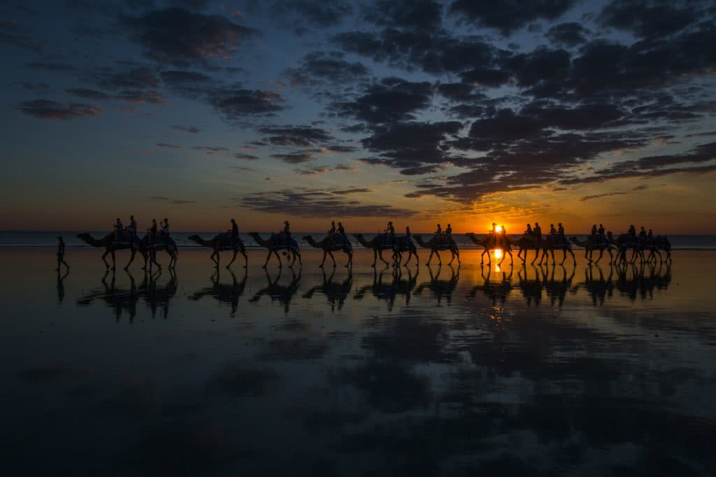 Exploring Australia From The Land, Sea And Sky – Wildlife Photographer Scott Portelli, Scott Portelli, camels, sunset, beach, shadows