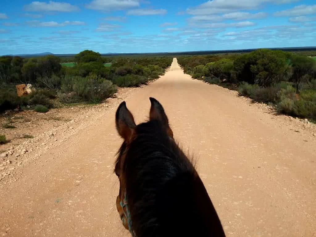 Hoofing It Across The Nullarbor, desert, horse head, dirt road