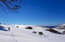 Damon Tually, Snowshoeing Across The Aussie Alps, snow, sky, man, tracks