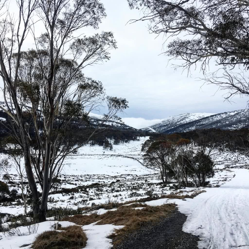 Snowshoeing Across The Aussie Alps , snow, trees, mountains, gumtrees