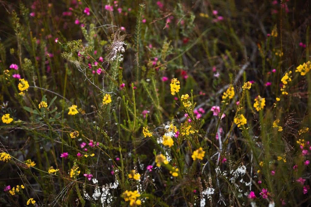 Wildflowers And Waterfalls At America Bay (NSW), Aedan O' Donnell, wildflowers, pink, yellow