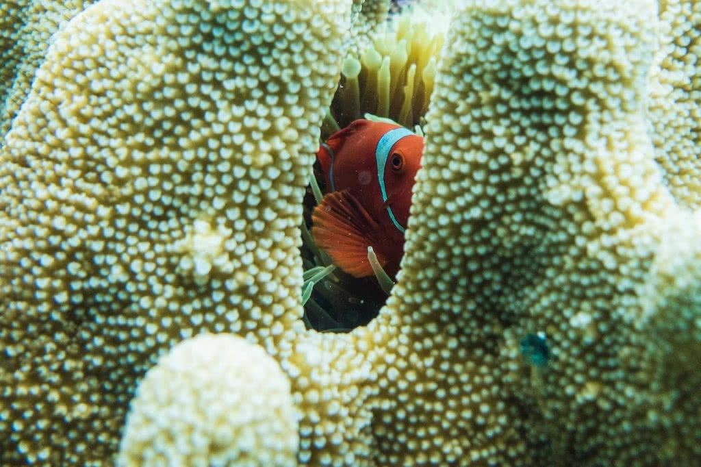 Save Your Skin & The Sea: Ocean Safe Sunscreen, Alice Forrest, Nemo, clown fish, eye, coral