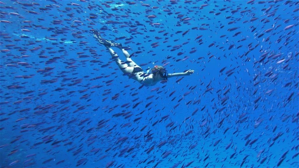 How Much Do You Really Know About New Caledonia?, photo supplied by New Cal tourism, snorkel, underwater, fish, blue, ocean