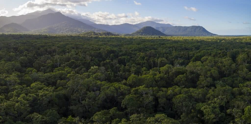 Protecting The Earth's Oldest Rainforest // Interview With Kelvin Davies, photo by Steven Nowakowski, Daintree, trees, panorama, mountains