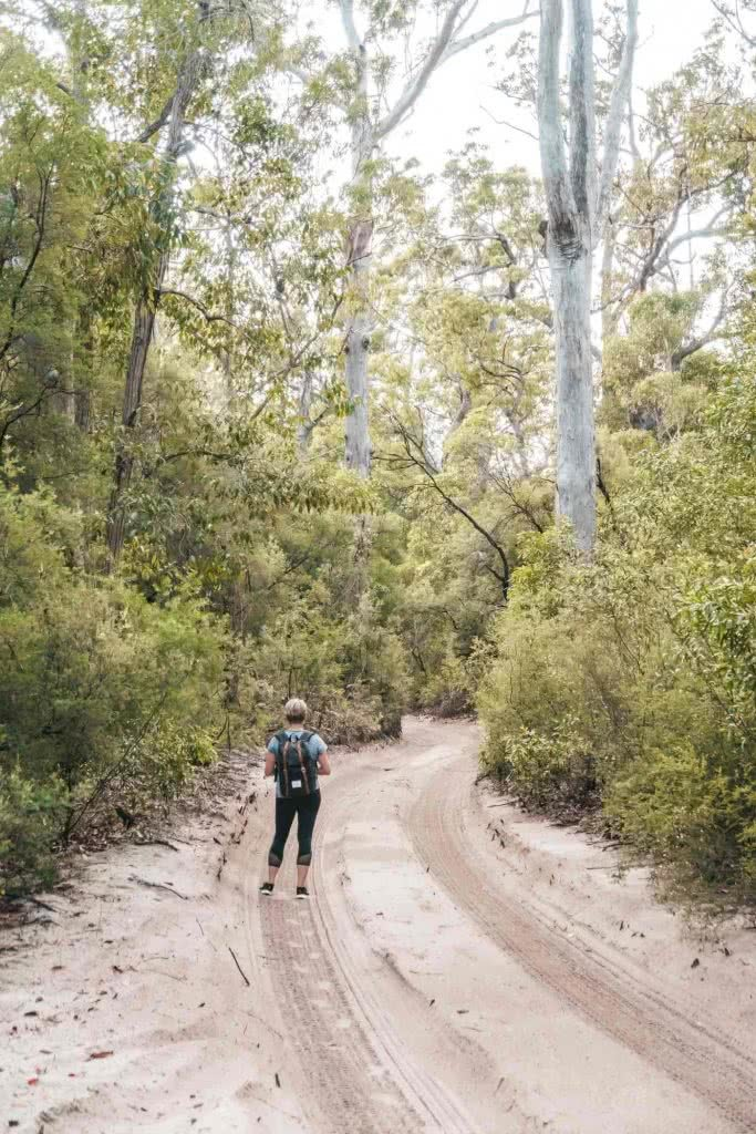 Fraser Island: Hiking To Lake McKenzie (No 4WD Required), Scott Pass, trees, sand, path, gumtrees