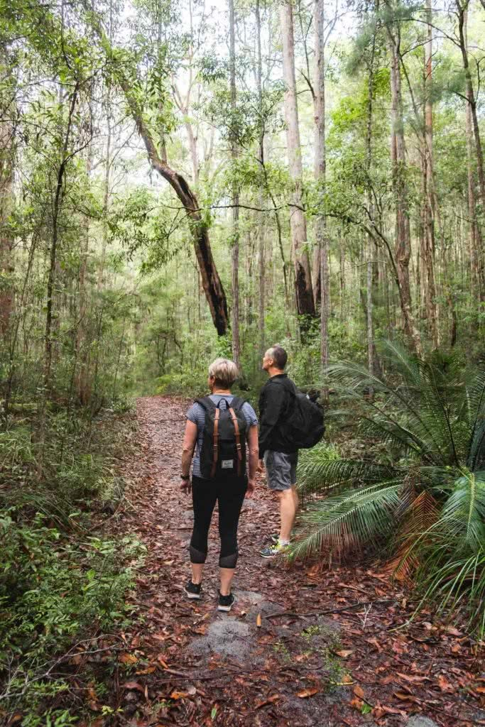 Fraser Island: Hiking To Lake McKenzie (No 4WD Required), Scott Pass, bush, people, path, trees, rainforest