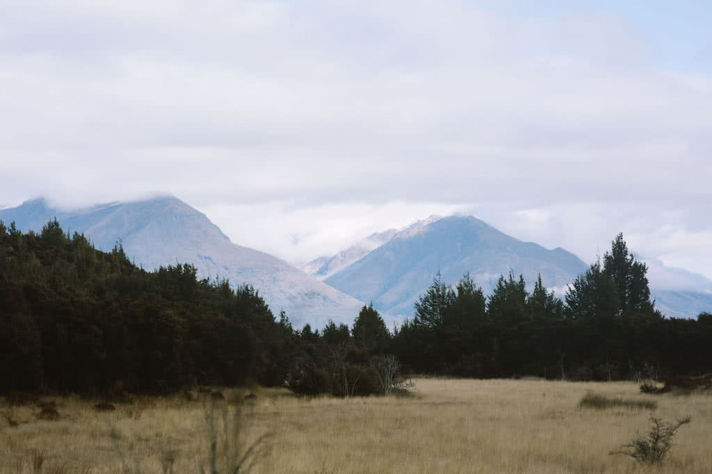 Take A Stroll Along The Mount Crichton Loop Track // Queenstown (NZ), Cedric Tang, mountains, forest, trees, tussock grass