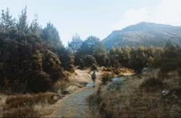 Take A Stroll Along The Mount Crichton Loop Track // Queenstown (NZ), Cedric Tang, mountains, trail, trees, Melody