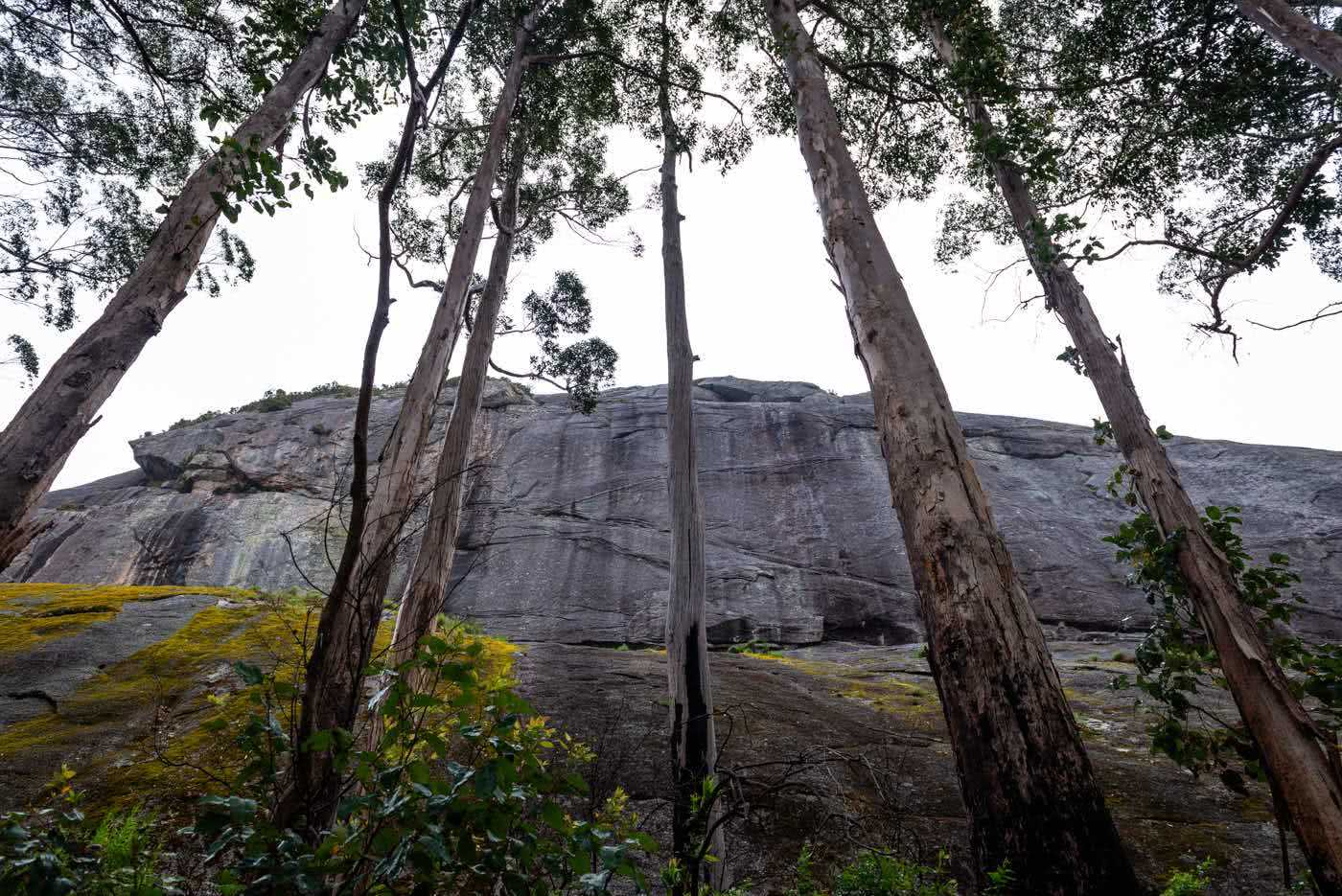 Around The Mountain On The Caldyanup Trail // Walpole(WA), Megan Warner, gum trees, mountain, rock, cliff, rain