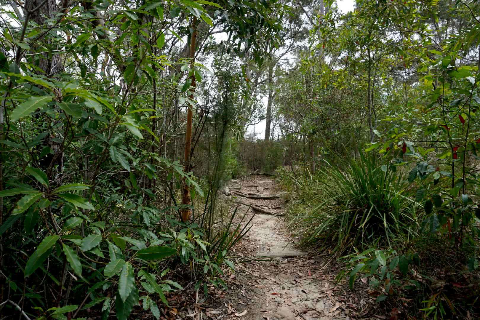 A Nature Escape Half An Hour From The Sydney CBD // Lane Cove National Park, rafaela khodai, lane cove, sydney, NSW, hiking trail, path