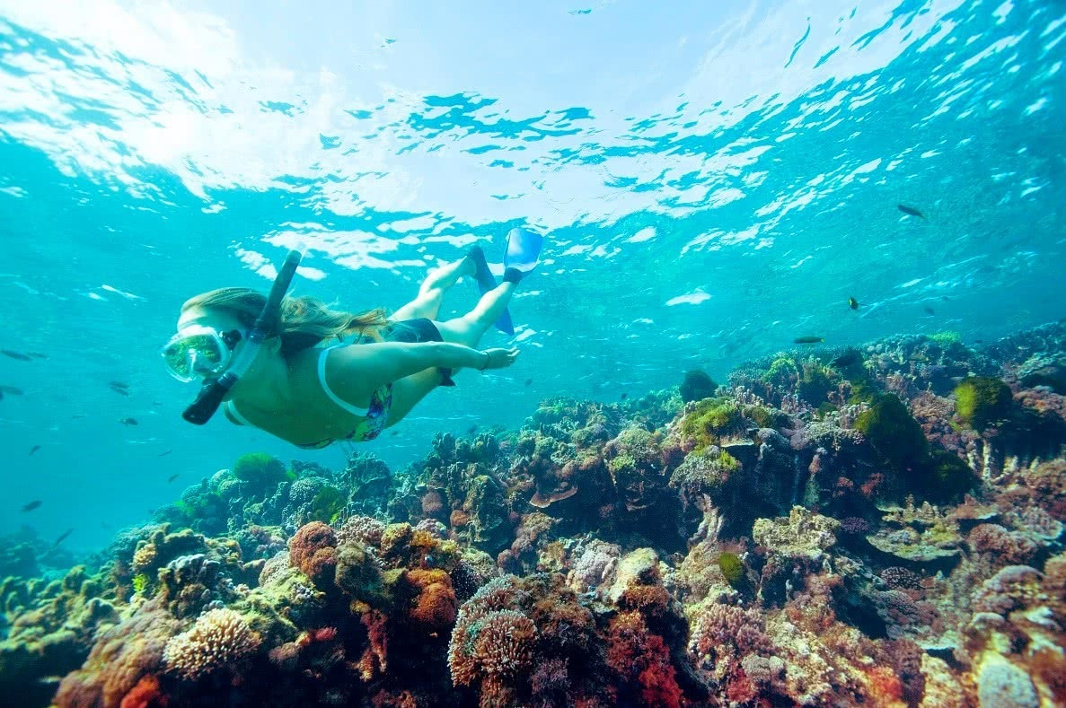 Snorkelling, Lord Howe Island, Destination NSW, coral, underwater,