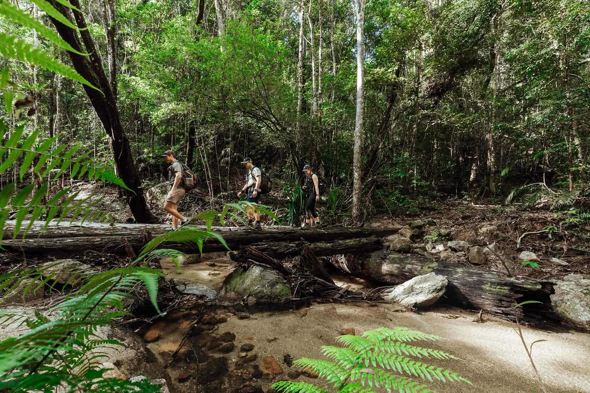 Cairns Hiking Experience, FNQ Nature Tours, Tropical North Queensland, River Crossing