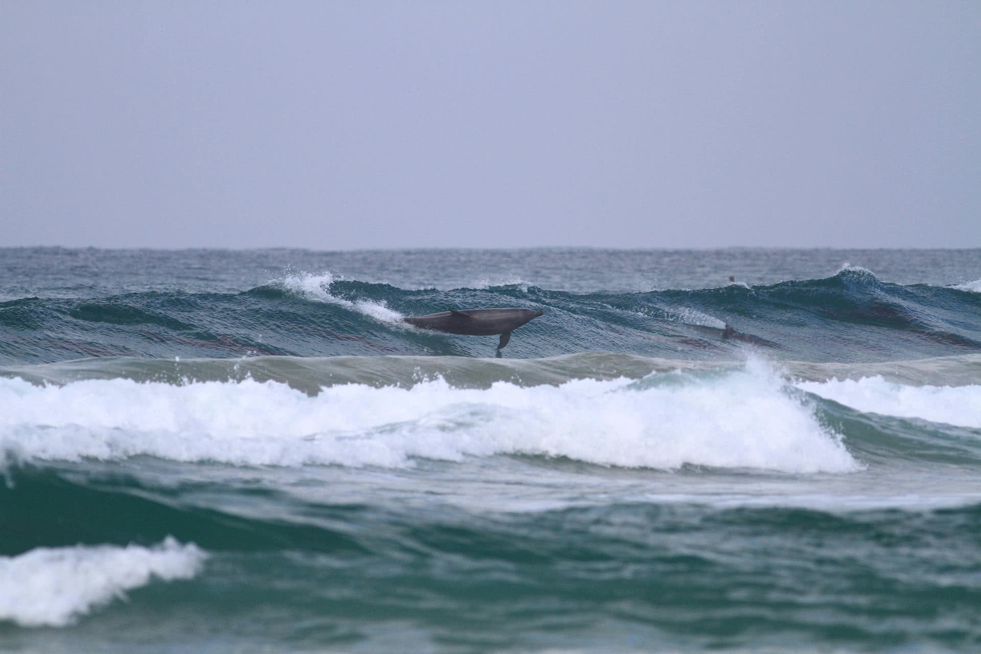 Learn To Surf Byron Bay, Soul Surf, We Are Explorers, Dolphins