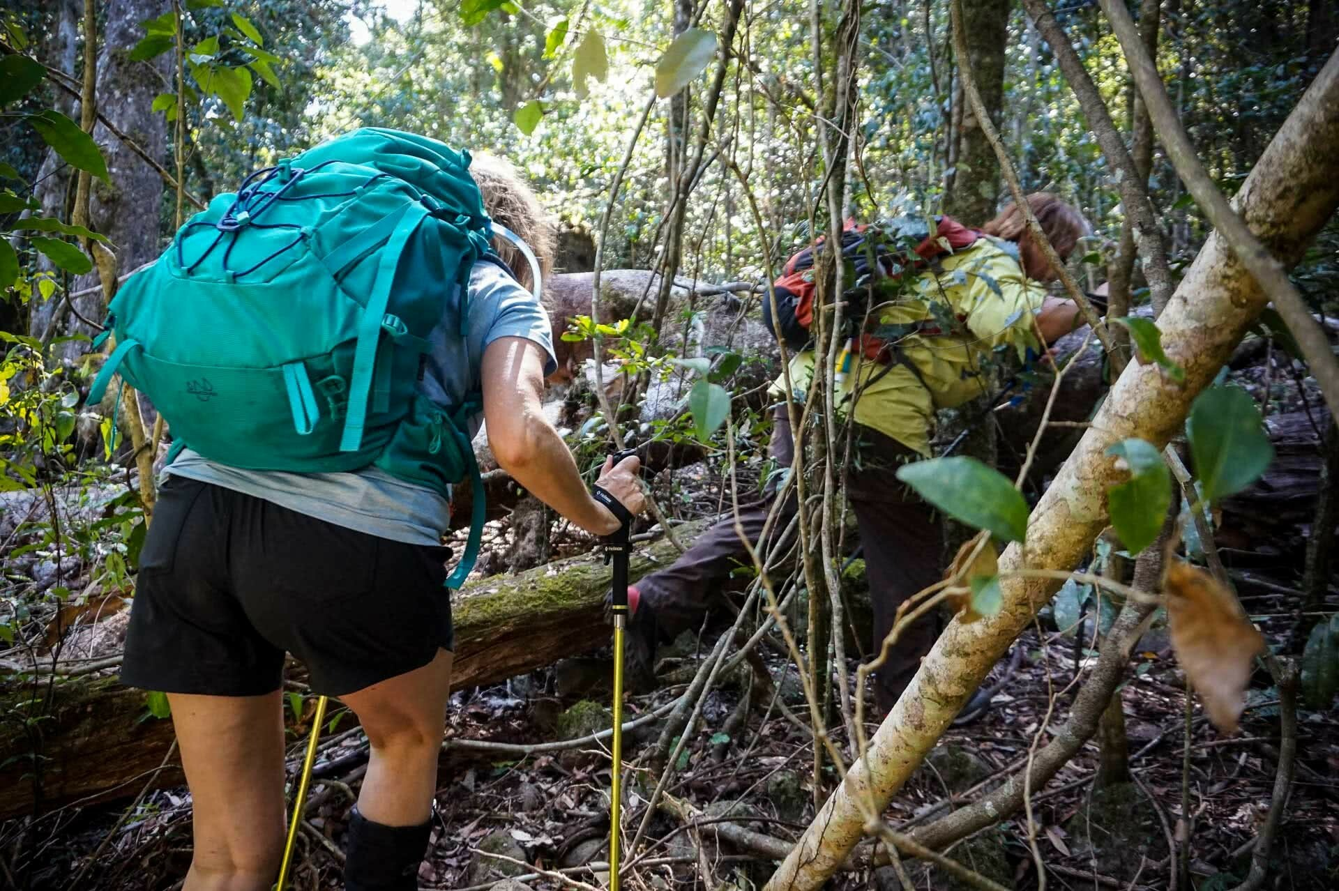 Pushing through scrub on way to waterfall, It's Tick Season! How Deal With and Avoid the Nastiest of Critters, Roz Glazebrook
