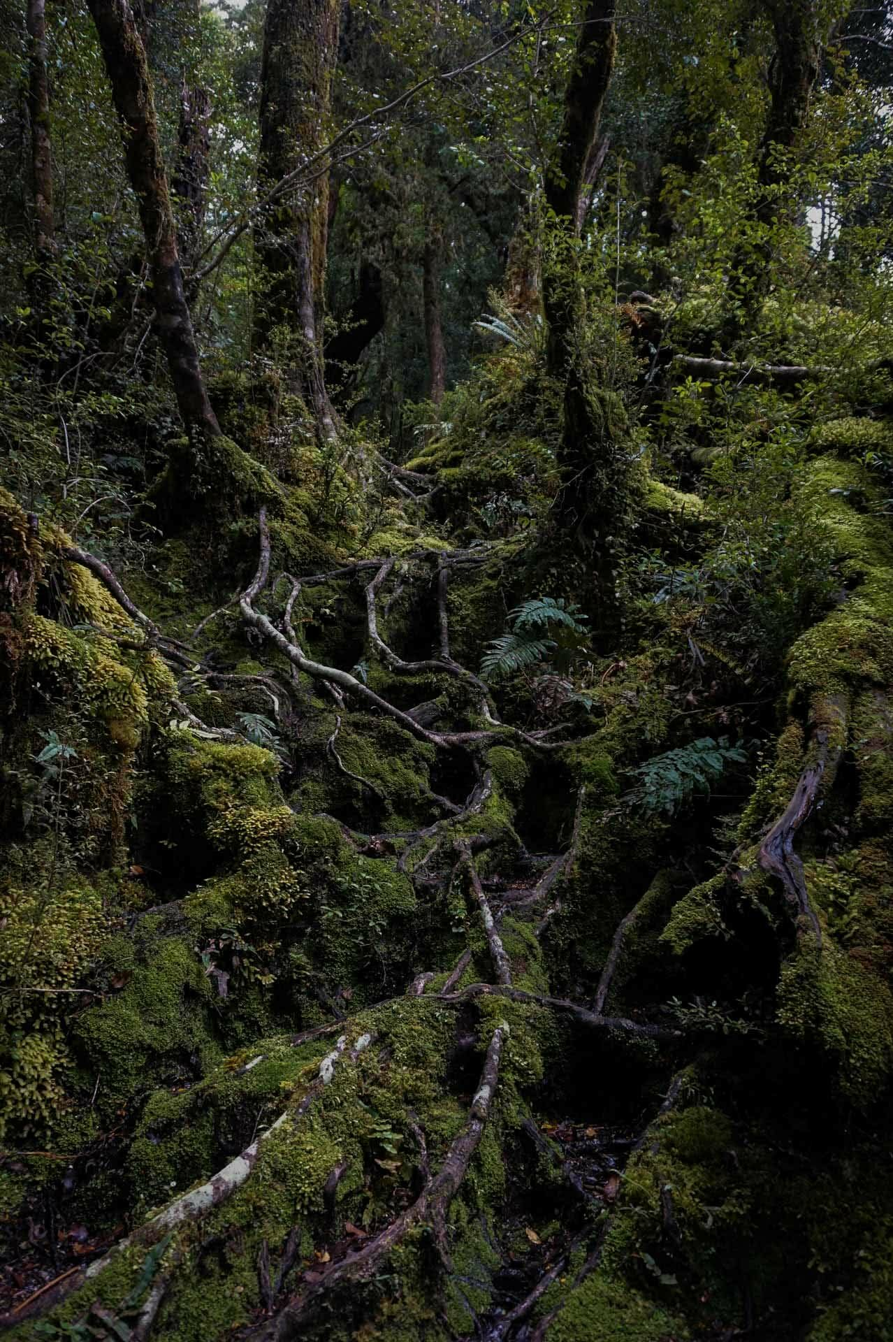 ankle rolling tree roots, dusky track, new zealand's hardest hike, winsome whyte, fiordland, south island, new zealand