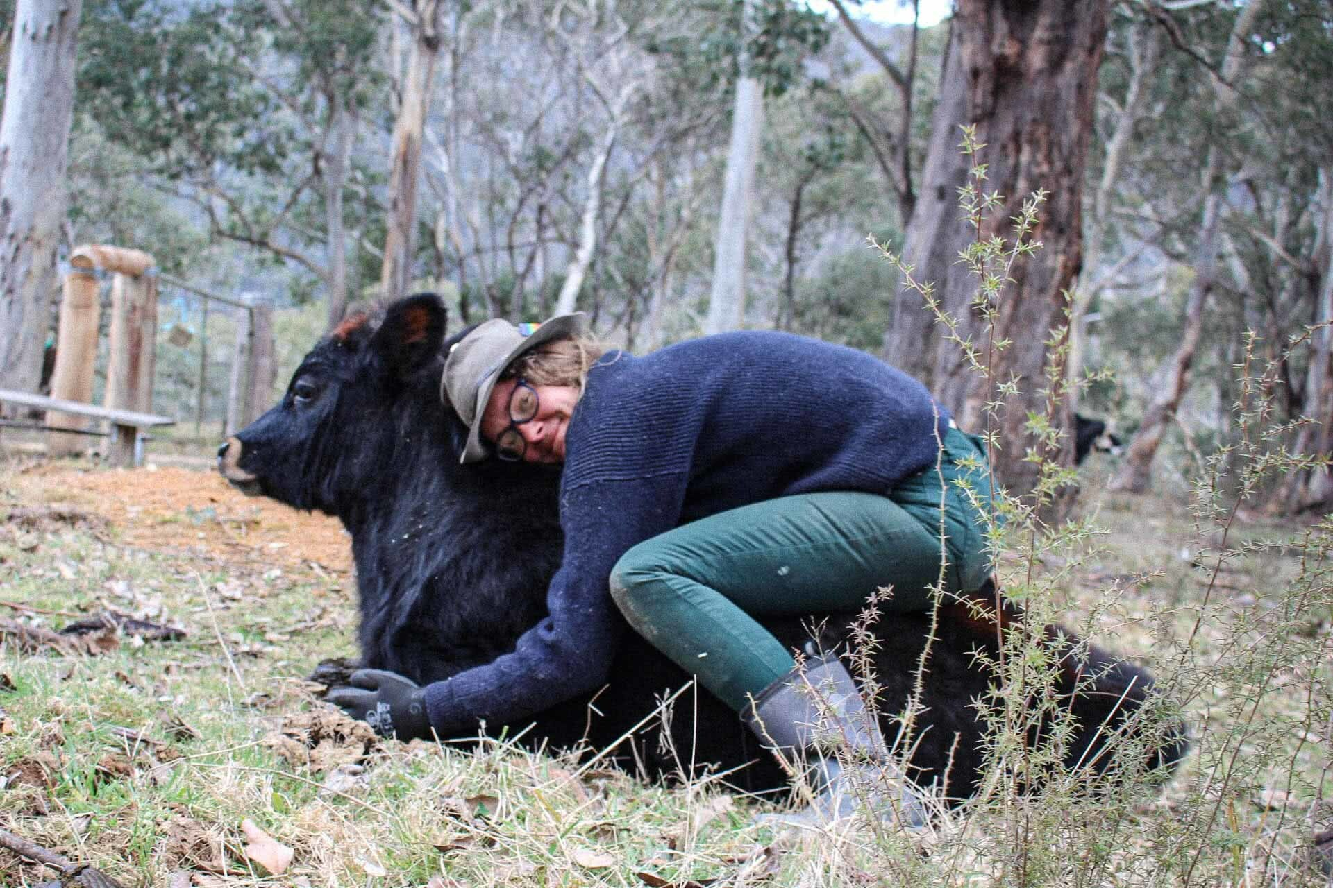 Cuddling calfies, 7 Things I Learned Living Without Technology for a Year, photo by Pippa Salmon, victorian high country