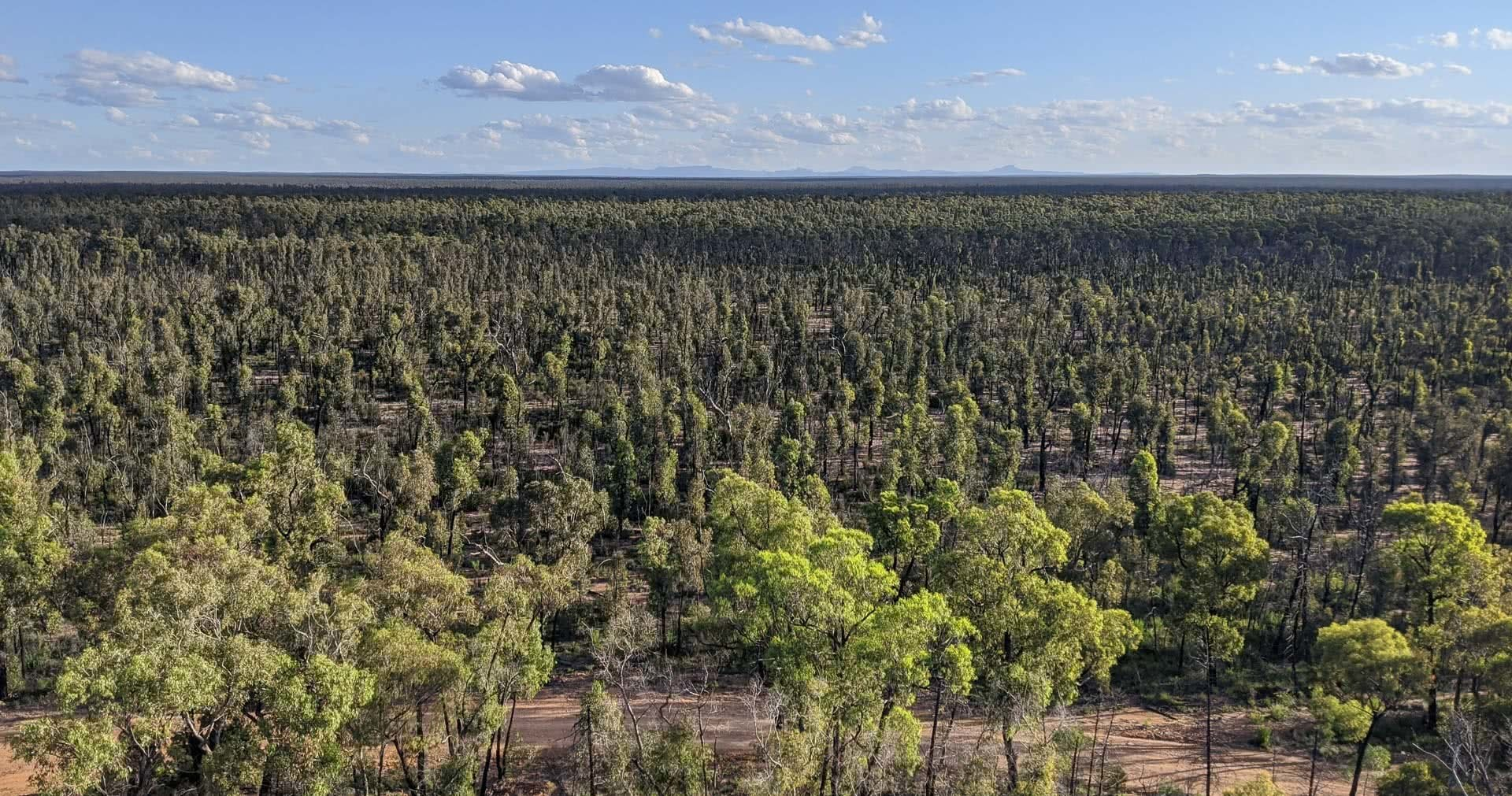 Pilliga Forest is Where Nature and Culture Collide, Amy Fairall, forest, view