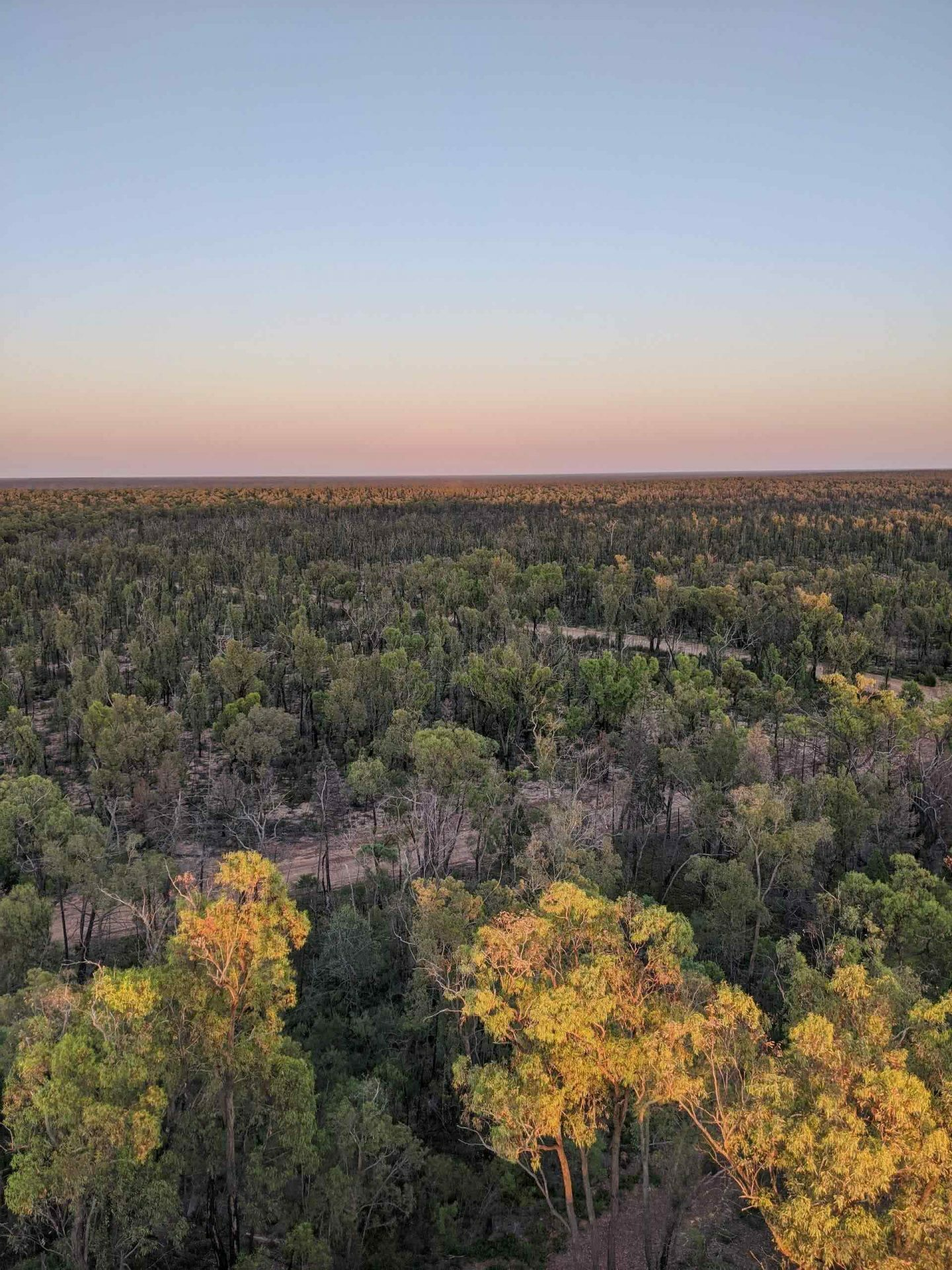 Pilliga Forest is Where Nature and Culture Collide, Amy Fairall, forest, view, sunrise