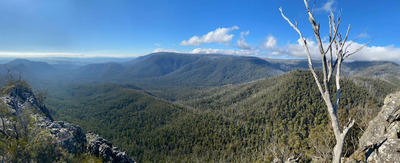The Best Day Trips From Melbourne, Arden Haar, Sugarloaf Peak, mountains, forest, view