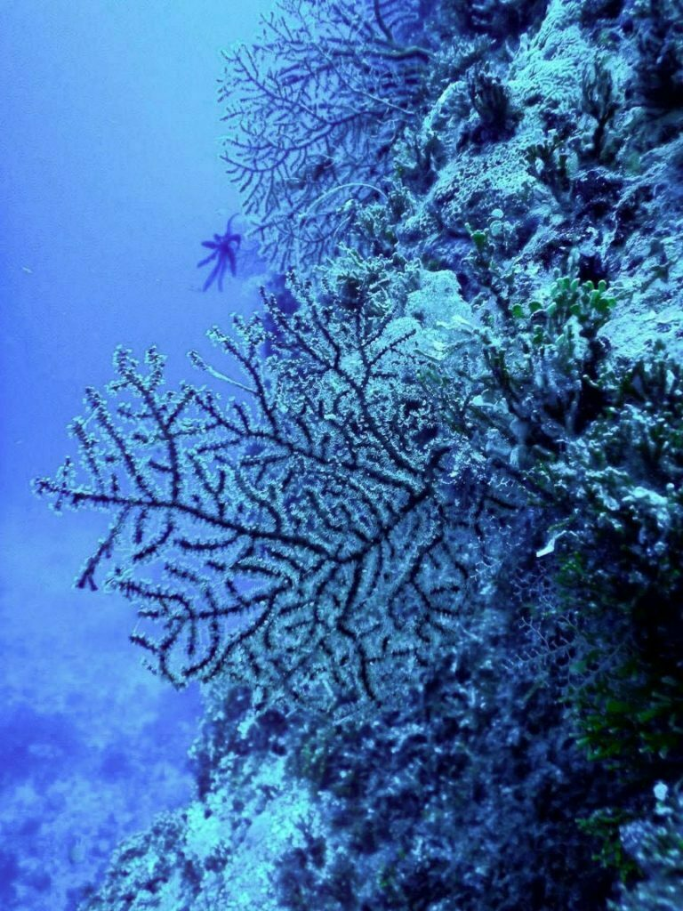 What's Happening to Our Reefs? The Effect of Global Heating on Marine Life, photo by Wendy Bruere, Coral Sea, outer Great Barrier Reef, Queensland,