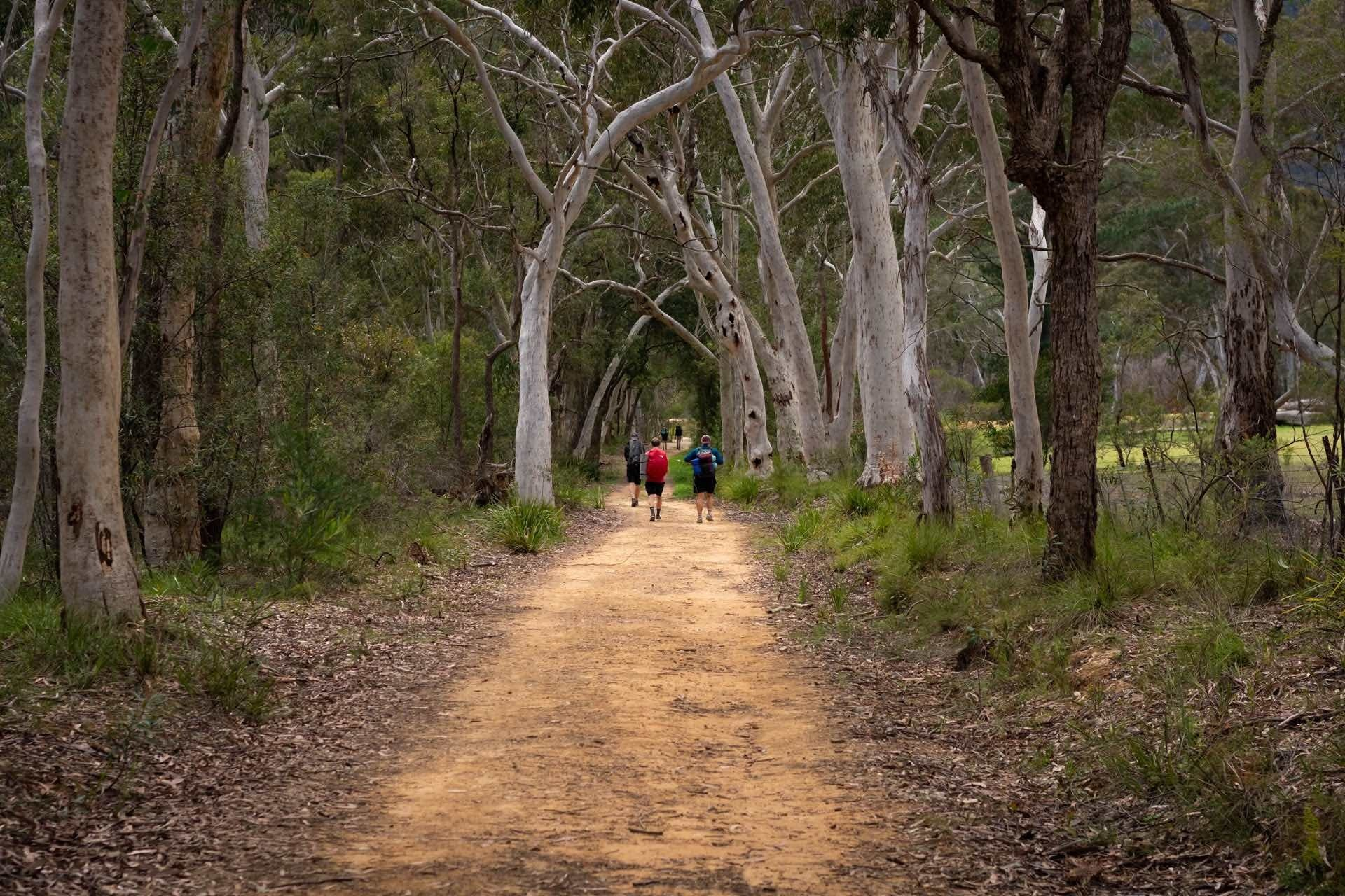 Overnight Hike From Katoomba to Cox's River Campground, Matt Pearce, Six Foot Track, trail, man, hike, forest