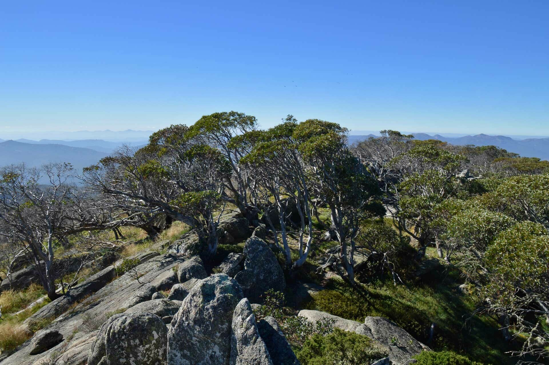 Snow gums and granite boulders on the Mt Gingera summit, Fast & Light – A Mt Gingera Overnight Hike in Under 24 Hours, Alice Wisse, ultralight, australian capital territory