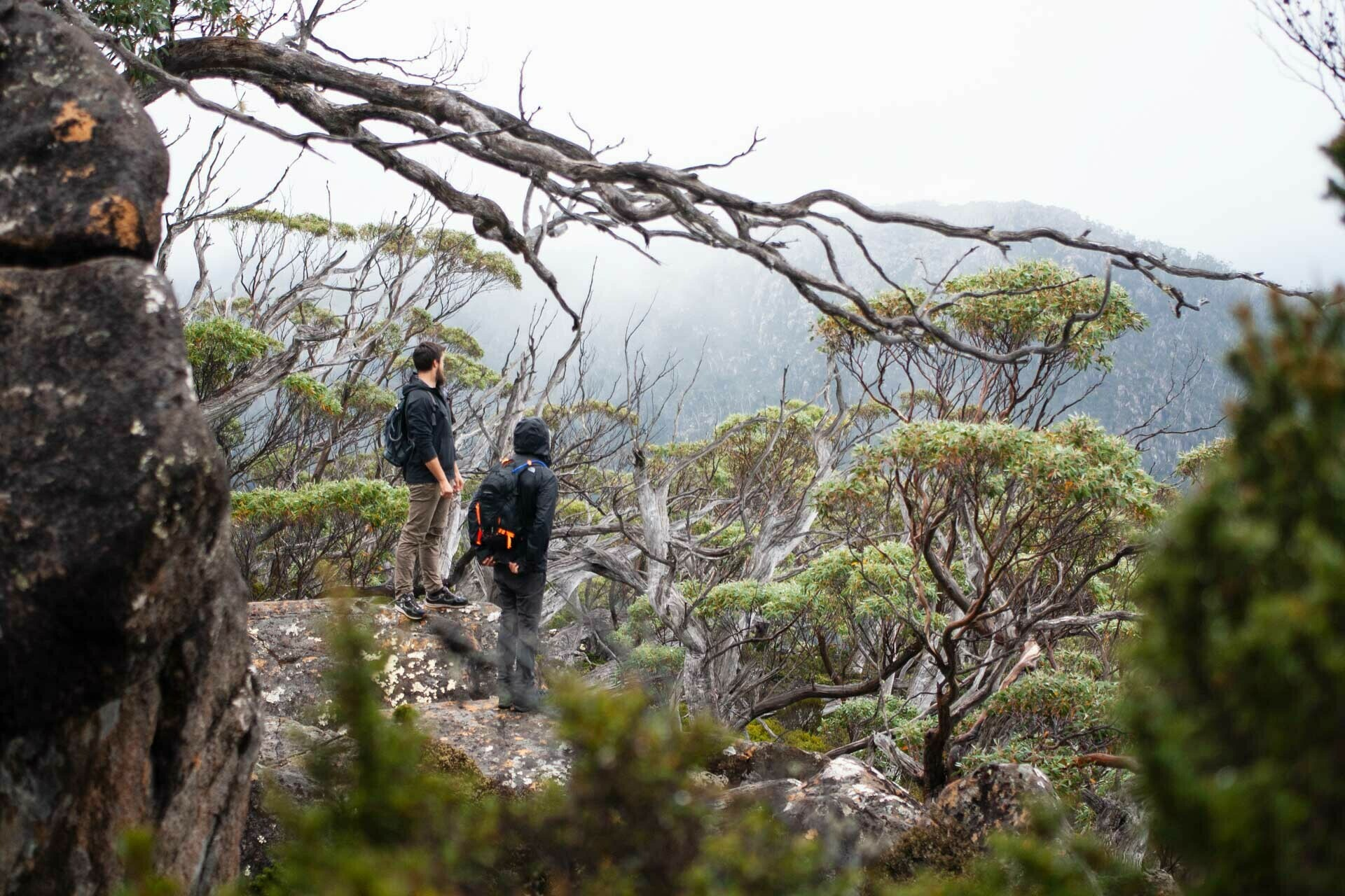 Looking over Mt Field National Park, The Tarn Shelf – Tasmania's Best Day Hike You've Never Heard Of, casey fung, tarn shelf, mt field national park, tasmania