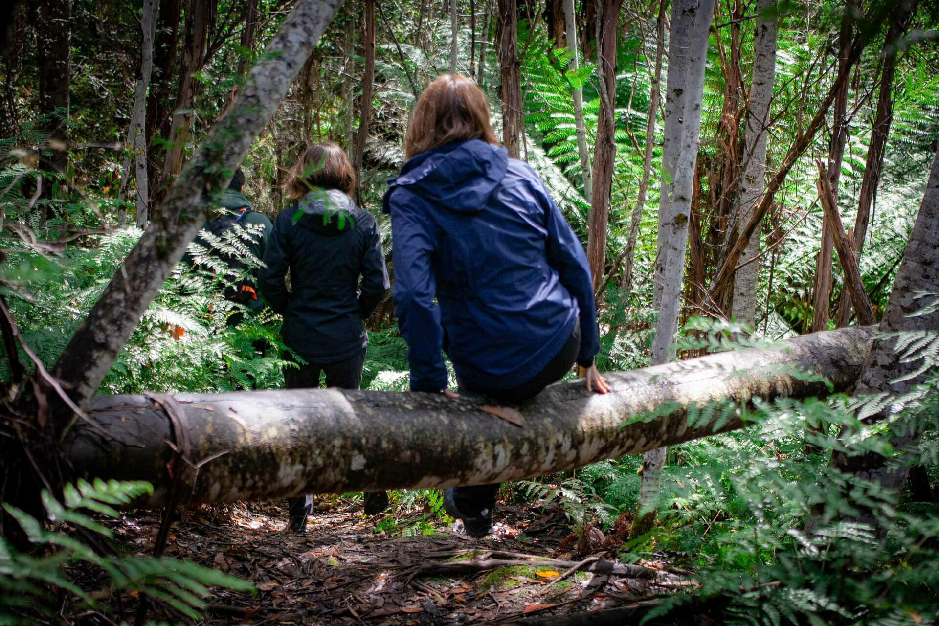 How To Walk Among Some of the World's Tallest Trees in Tassie, tolkien tall trees, styx river conservation park, tasmania