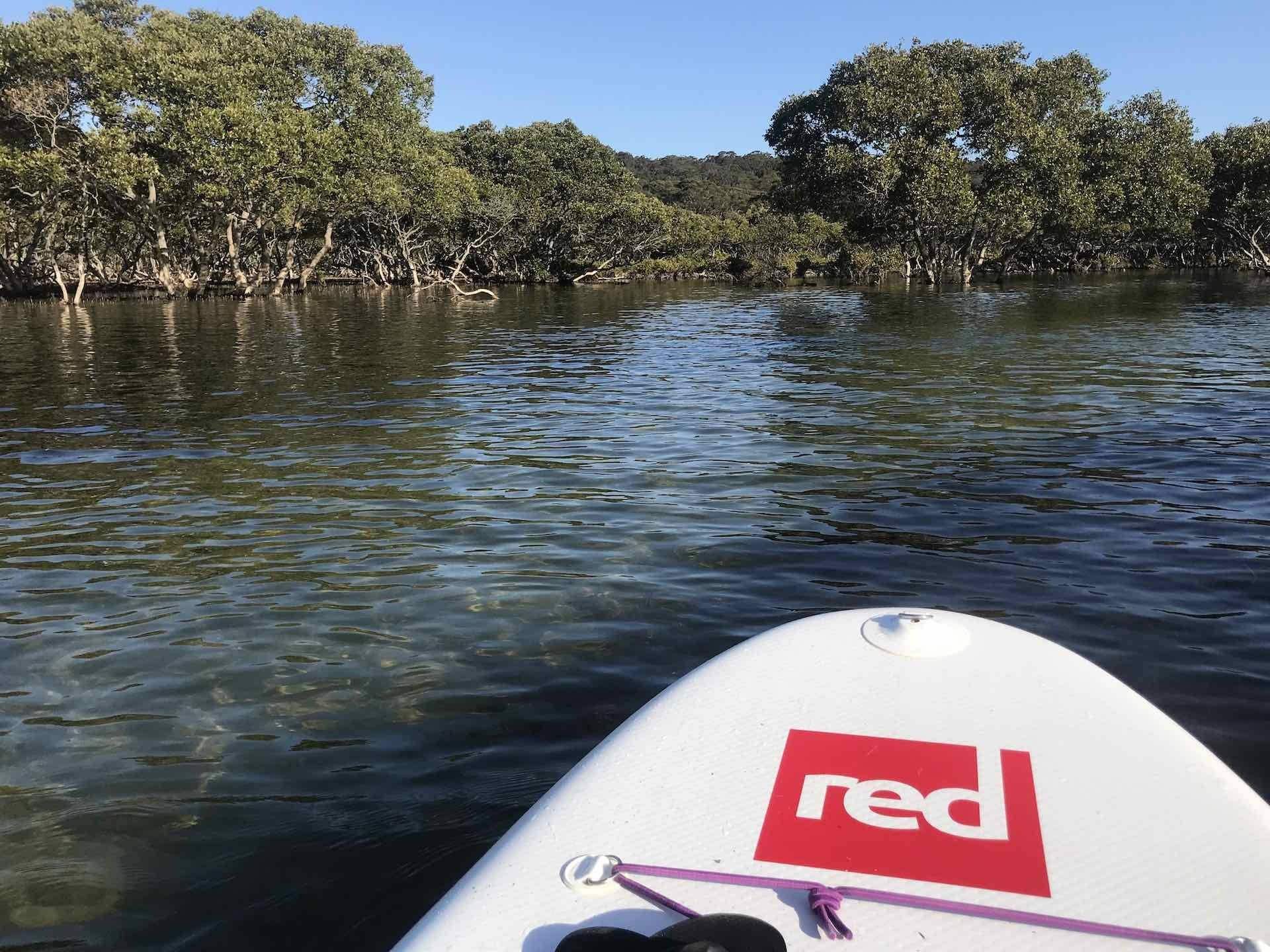 5 Best Places to Stand Up Paddle Board Around Sydney (Out of The Ocean), photo by She SUPs, Cabbage Tree Basin