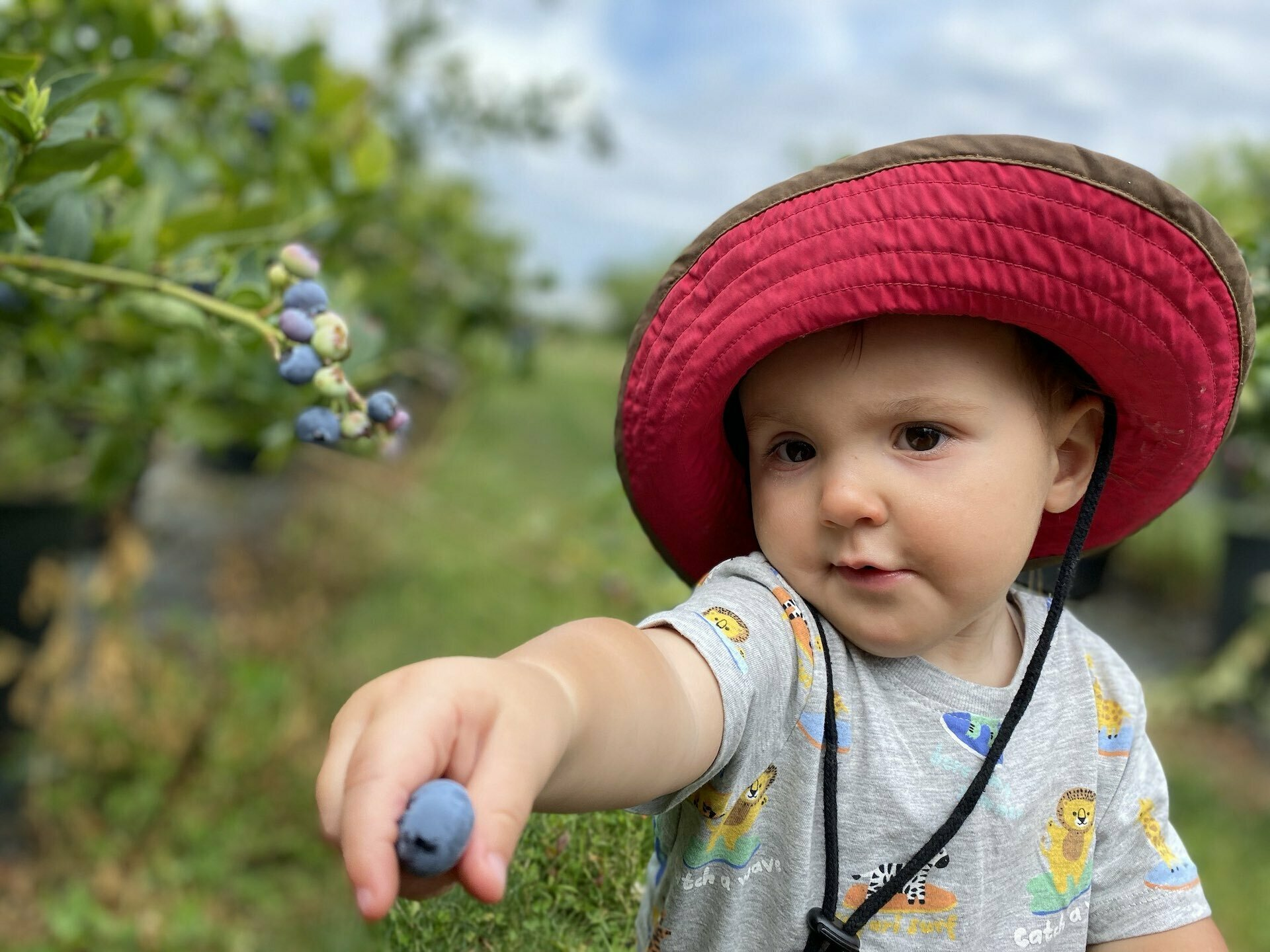 How To Travel Tasmania With Your Adventure Family - Sarah Tayler, Blueberries, Child, Family, Foraging, Food