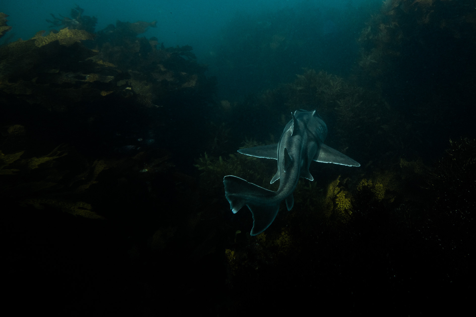 Meet The Underwater Residents of Sydney's Cabbage Tree Bay Aquatic Reserve – Photo Essay